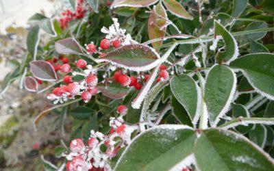 Le piante e il freddo